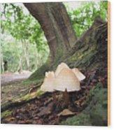 Mycena Wood Print