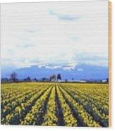 Myriads Of Daffodils Wood Print