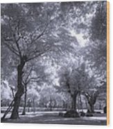 Mysterious Park Wood Print