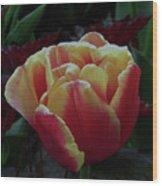 Mysterious Tulip Wood Print