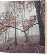 Mysterious Woods  Wood Print