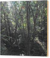 Mystery Wood Print