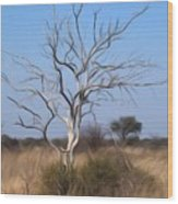 Mystic Buishveld Tree Wood Print