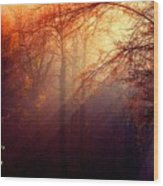 Mystic Forest At Dawn L A Wood Print