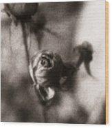 Mystic Rose Wood Print