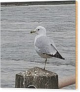 N Y C Water Gull Wood Print
