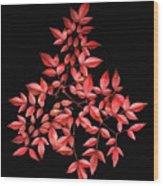 Nadina Branch Wood Print
