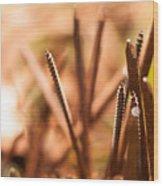 Nails On Dragon Wood Print