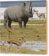 Nakuru Lake Wood Print