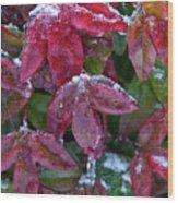 Nandina Winter Ice Wood Print