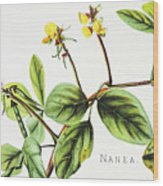Nanea Flower Art Wood Print