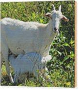 Nanny And Kid Goat Wood Print