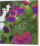 Nan's Fushia Wood Print