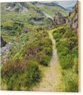Nant Ffrancon Footpath Wood Print