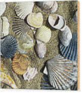Nantucket Shells Wood Print