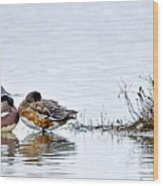 Nap Time On The Pond Wood Print