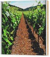 Napa Rows Of Grapes Wood Print