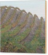 Napa Vineyard Wood Print