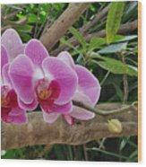 Naples Orchid 1 Wood Print
