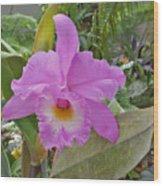 Naples Orchid 3 Wood Print