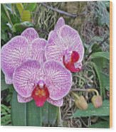 Naples Orchid 4 Wood Print