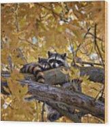 Napping Bandits Wood Print