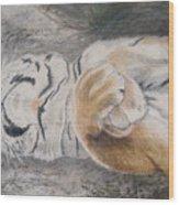 Napping Wood Print