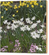 Narcissus And Daffodils In A Spring Flowerbed Wood Print