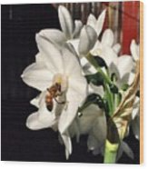 Narcissus And The Bee 1 Wood Print by Daniele Smith