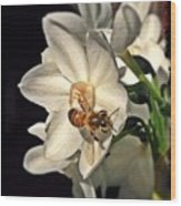 Narcissus And The Bee 3 Wood Print