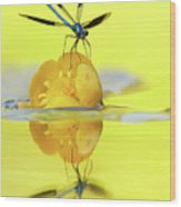 Narcissus - Damselfly Reflected In The River Wood Print