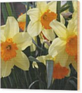 Narcissus Fortissimo Wood Print