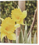 Narcissus Of A Plant Wood Print
