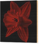 Narcissus Red Flower Square Wood Print