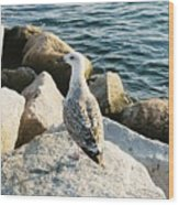 Narragansett Gull Wood Print