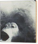 Nasa Chimpanzee, 1961 Wood Print