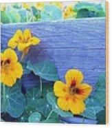 Nasturtium Box Wood Print