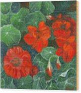Nasturtiums Wood Print