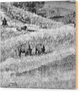 National Bison Range Wildlife Refuge Mt Usa Wood Print