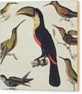 Native Birds, Including The Toucan From The Amazon, Brazil Wood Print