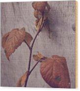 Native Land  Wood Print