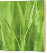 Native Prairie Grasses Wood Print