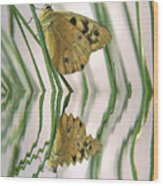 Native Tasmanian Butterfliy. Wood Print