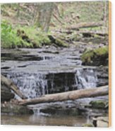 Native Trout Stream Wood Print