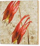 Native Virginia Columbine Wood Print