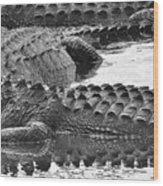 Gator 2 18 Wood Print