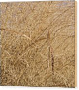 Natural Abstracts - Elaborate Shapes And Patterns In The Golden Grass Wood Print