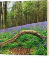 Natural Arch And Bluebells Wood Print