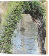 Natural Archway Over Hillsborough River Wood Print