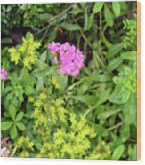 Natural Background With Vegetation And Purple Flowers. Wood Print